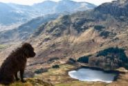 Holiday cottages in Lake District with dogs